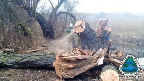 Havraň-likvidace nebezpečných stromů